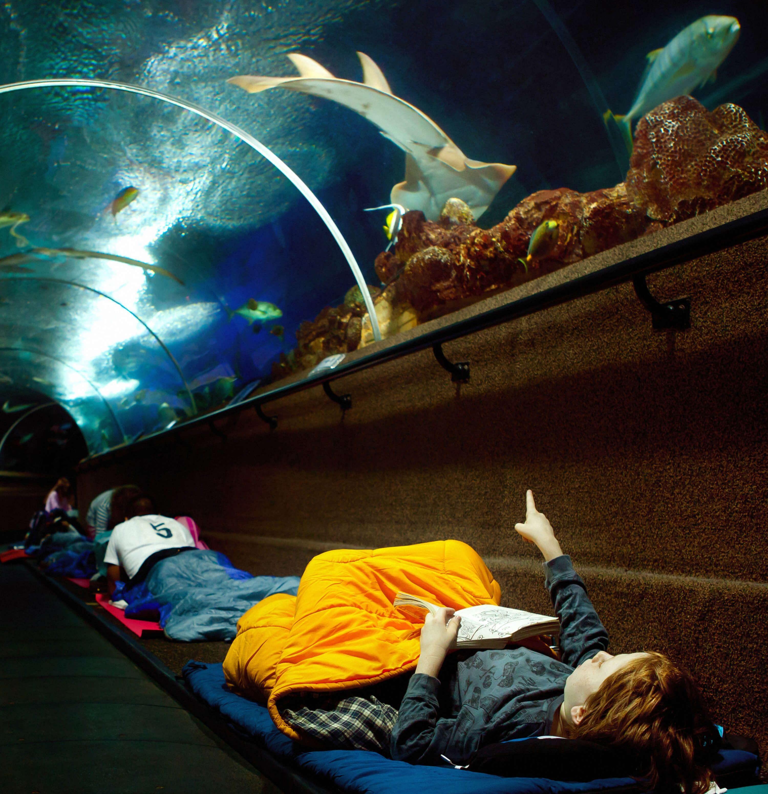 Fish aquarium in sentosa - Sleeping Under The Fishes