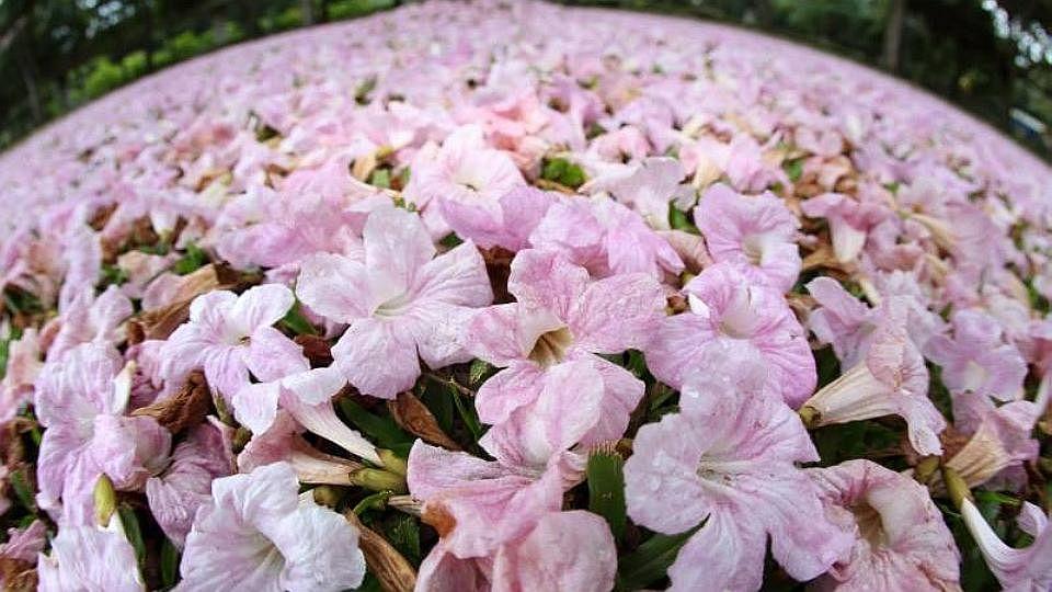 Pinkflowerbloomscropped15