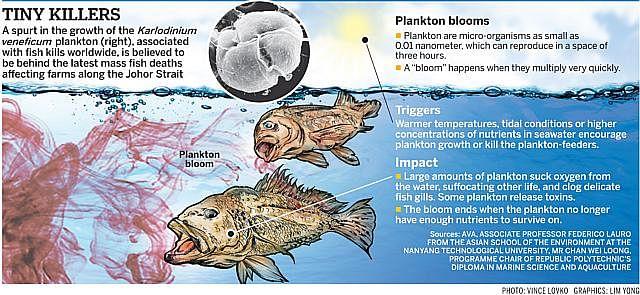 PlanktonNEW09