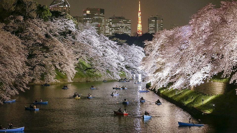 Blossom2 3103