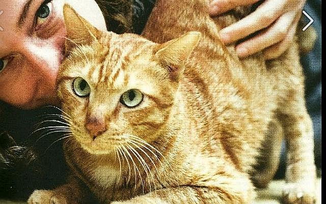 Cat130