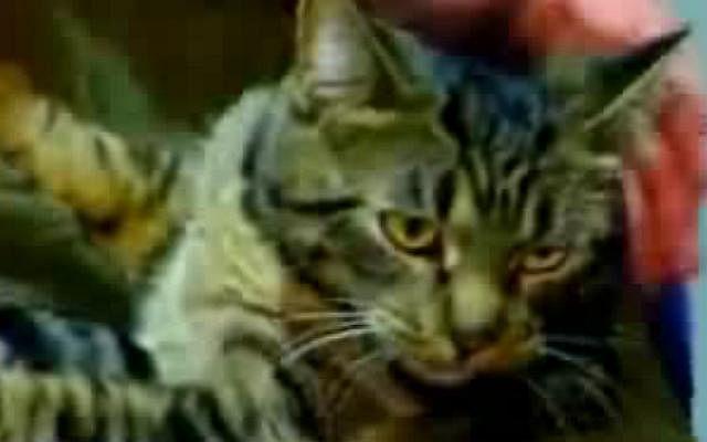 Cat230