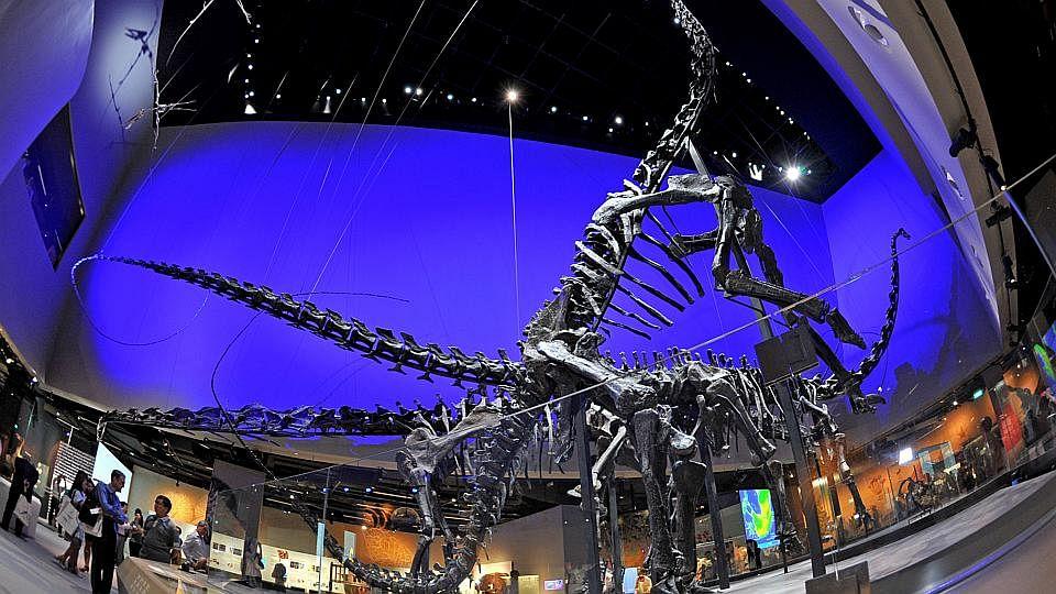 DinomuseumA