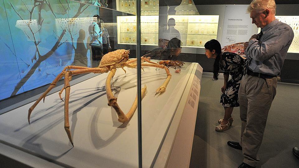 DinomuseumB