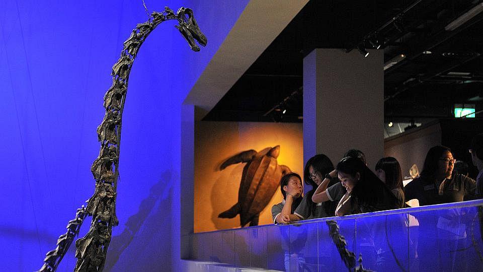 DinomuseumC