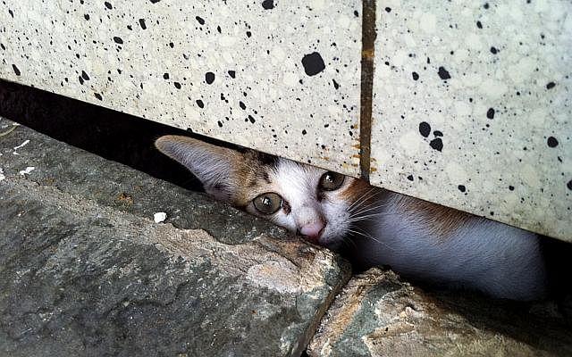 Dw mm kitten 150519