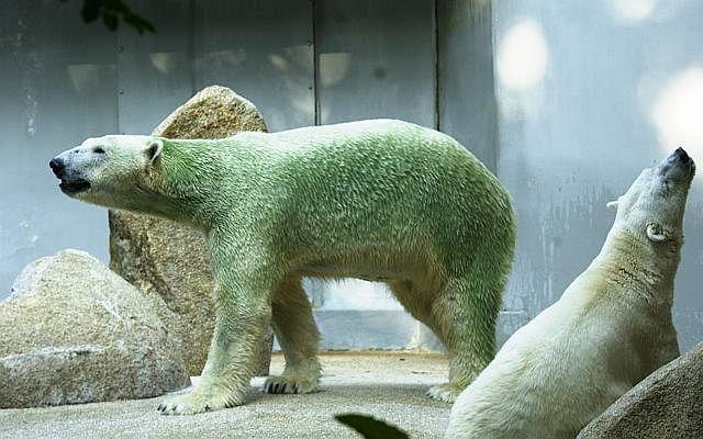 Polar19 0