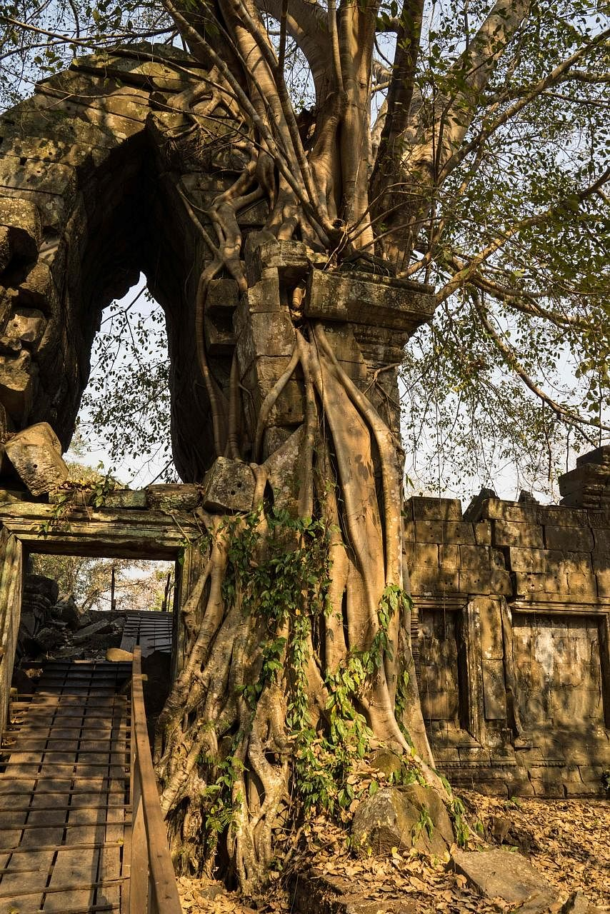 Laser scanning revealed the ruins of a huge city around Preah Khan of Kompong Svay under dense forest growth.