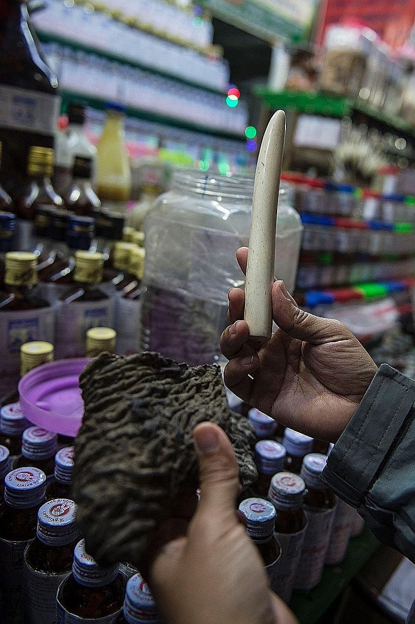 Getrocknete Elefantenhaut und ein Elfenbein-Stoßzahn zum Verkauf an einem traditionellen Medizin-Shop an der Goldenen Felsen-Pagode.