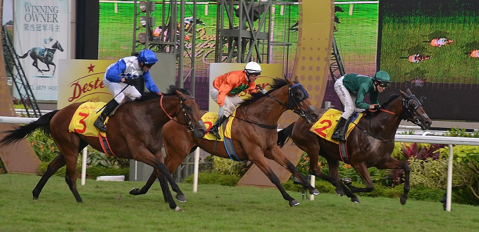 Jockey Michael Rodd (green cap) guiding Gilt Complex to an unlikely victory in the Dester Singapore Gold Cup. The top three horses were each separated by a mere 0.01 second in the closest of photo finishes.