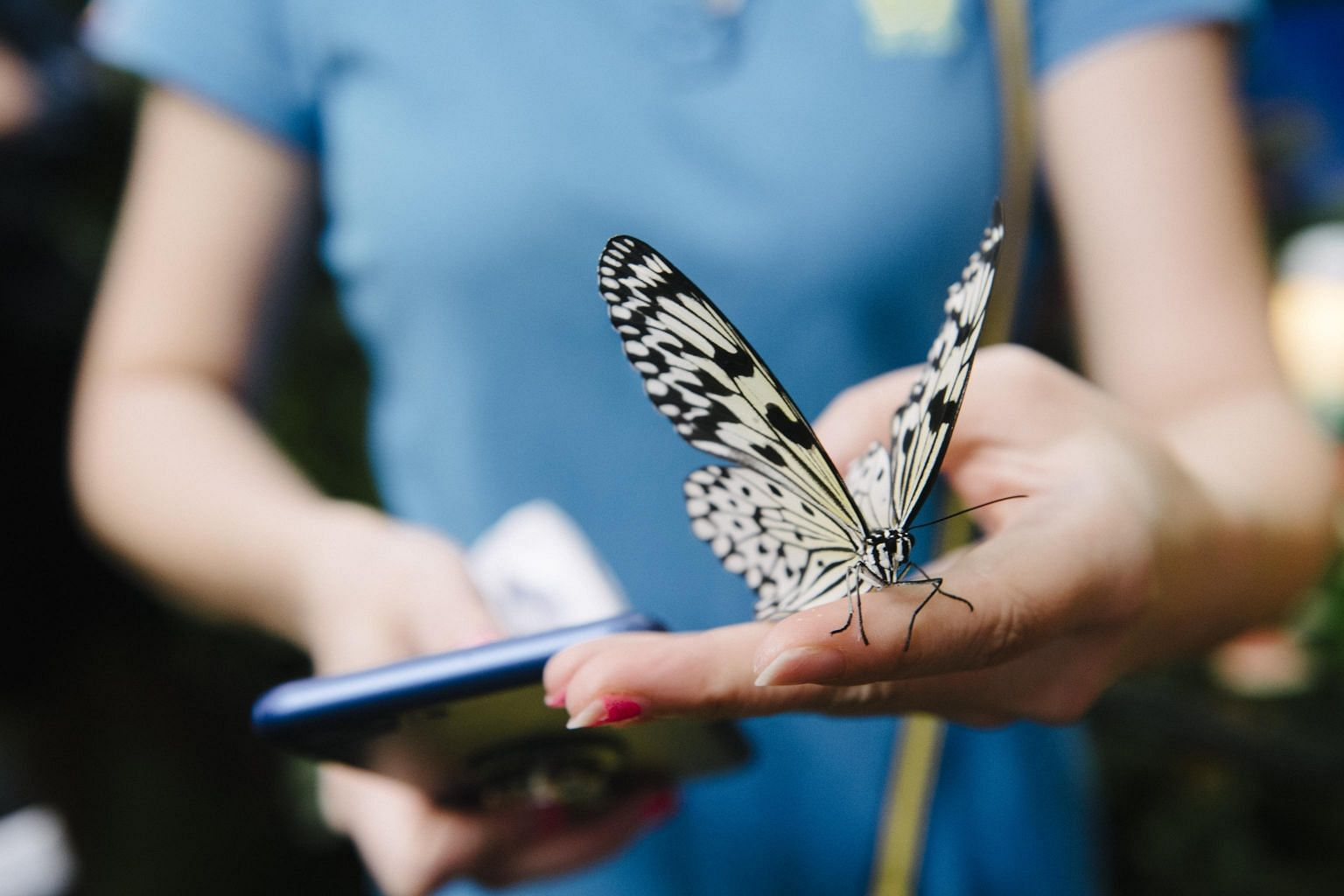 Exotic Butterflies Will Be All Aflutter At Indoor Exhibit Tiket Butterfly Park Insect Kingdom Harbourfront Centre Singapore News Top Stories The Straits Times