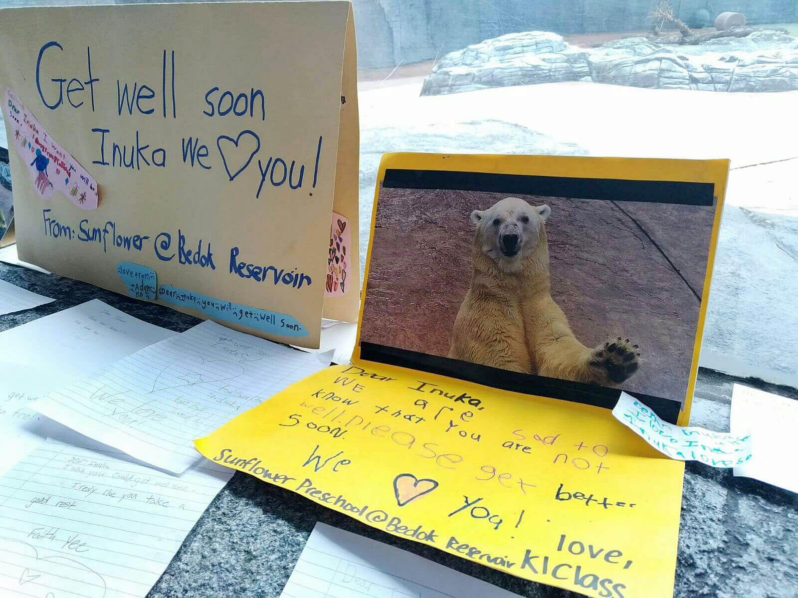 Singapore: Inuka, the first ever polar bear born in the tropics, dies