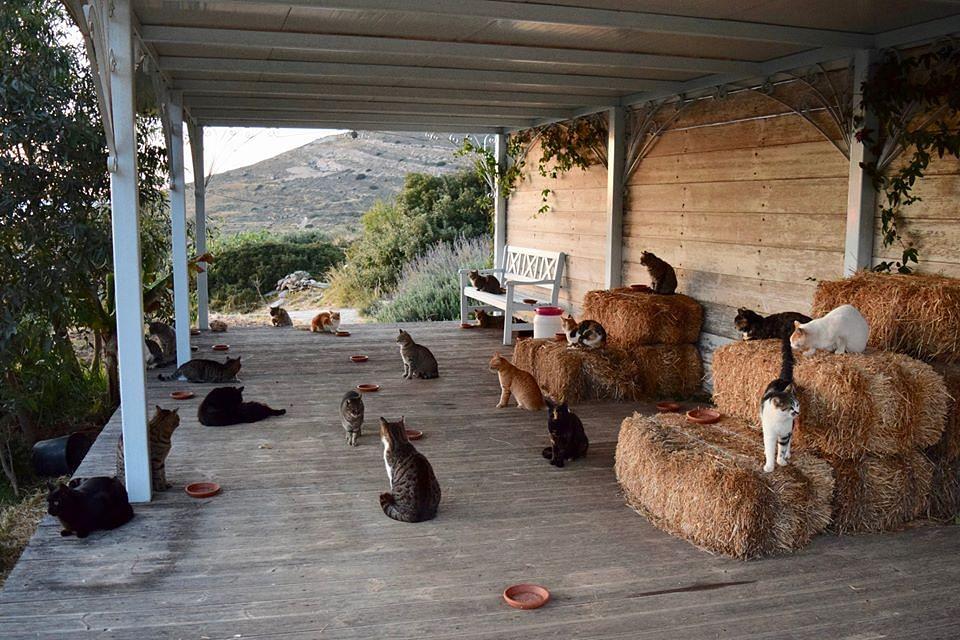 Greek cat sanctuary hiring caretaker to live on island, supervise 55 cats