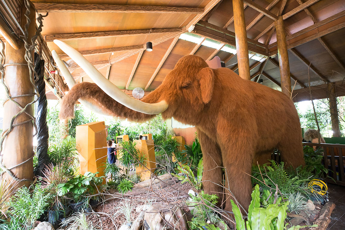 Mammoth alive woolly found Woolly mammoth