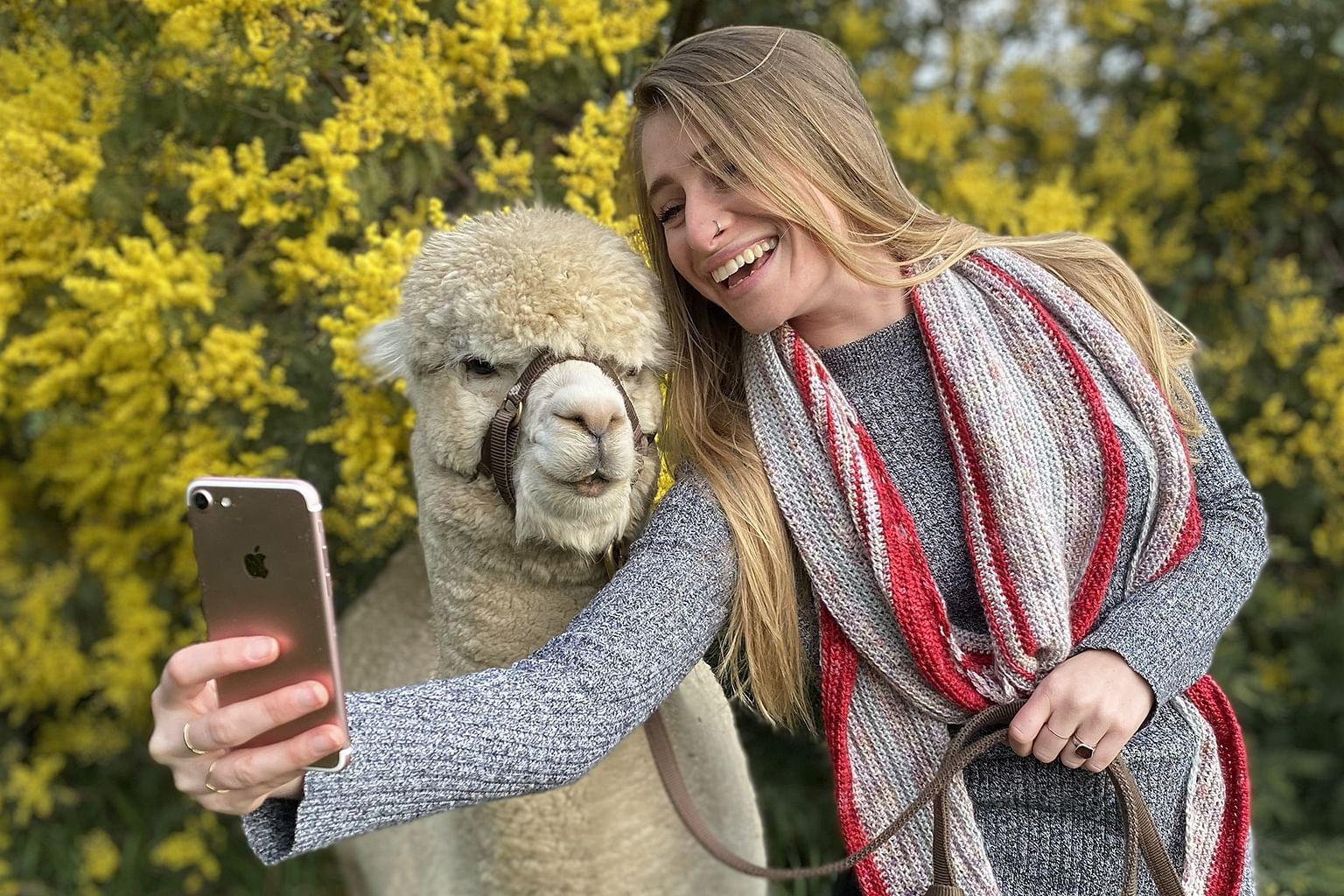 Canberra District, New South Wales, Australia, Wine, Blackwattle Alpaca Farm