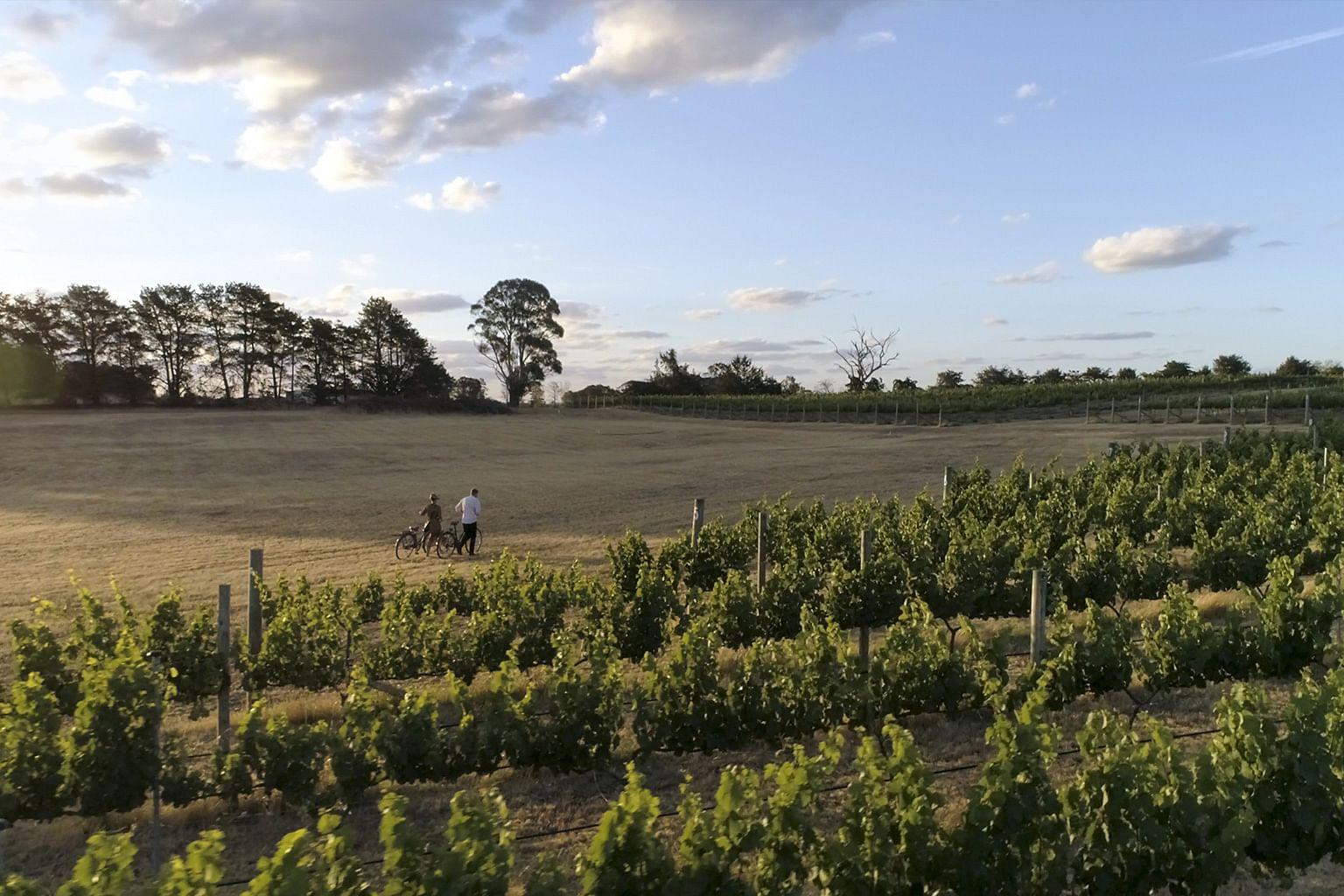Canberra District, New South Wales, Australia, Wine, Clonakilla
