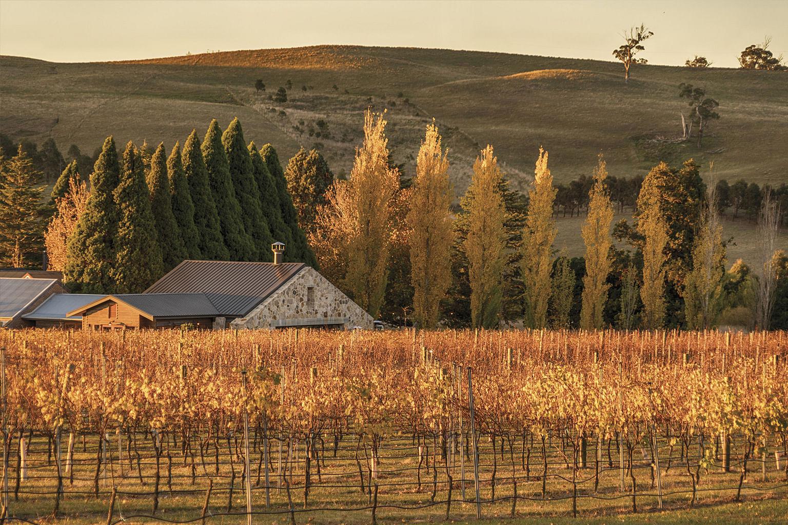 Southern Highlands, New South Wales, Australia, Wine, Bendooley Estate, Berrima