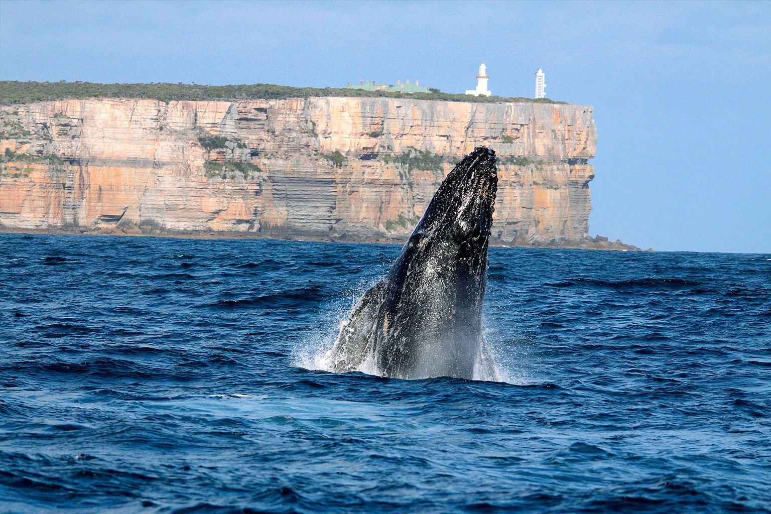 Shoalhaven Coast, New South Wales, Australia, Wine, Jervis Bay